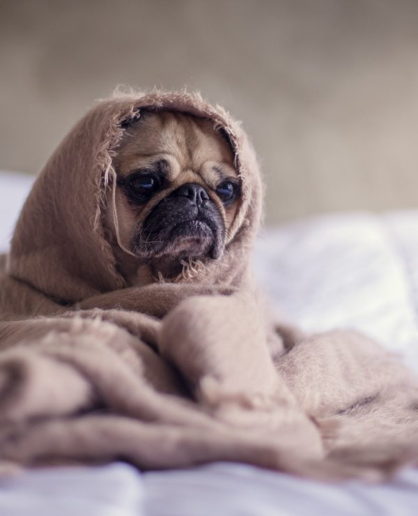 A sick dog